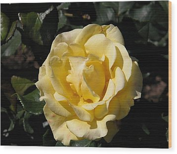 Butter Rose Wood Print by William Thomas