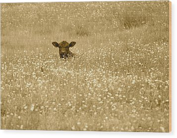 Buttercup In Sepia Wood Print