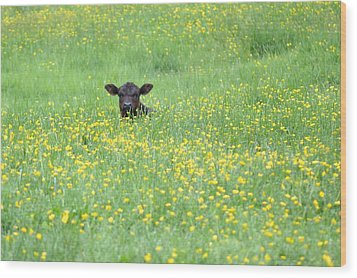 Buttercup Wood Print by JD Grimes