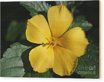 Buttercup Sunshine Wood Print by Theresa Willingham