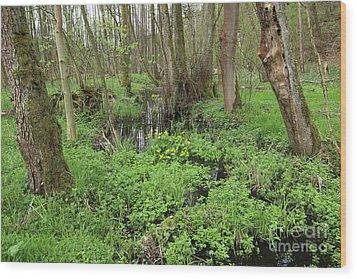 Buttercups In Wetlands Wood Print by Michal Boubin