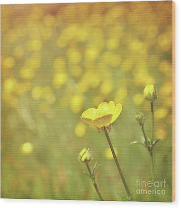 Buttercups Wood Print by Lyn Randle