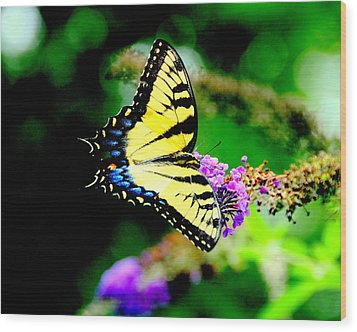 Butterflie Wood Print by Aron Chervin