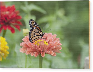 Butterflies And Blossoms Wood Print by Bill Cannon