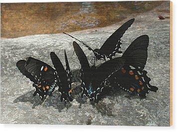 Butterflies Drinking Wood Print