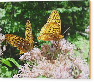 Butterflies Wood Print by Eric Workman