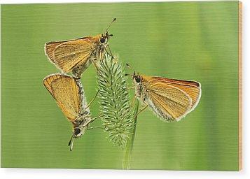 Butterflies Wood Print by Mircea Costina Photography