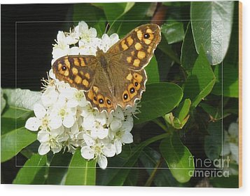 Wood Print featuring the photograph Butterfly 1 by Jean Bernard Roussilhe
