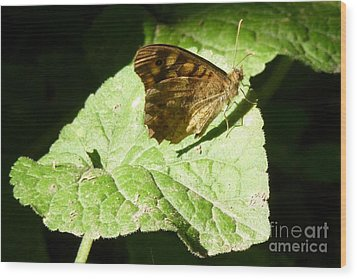 Wood Print featuring the photograph Butterfly 2 by Jean Bernard Roussilhe