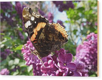 Butterfly 7 Wood Print