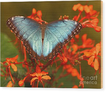 Wood Print featuring the photograph Butterfly Among The Flowers by Max Allen