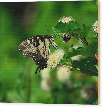 Butterfly And The Bee Sharing Wood Print by Kathy Eickenberg