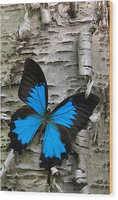Butterfly Wood Print by Andreas Freund