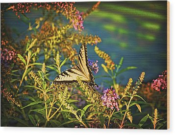 Butterfly Bandit Wood Print by Nick Roberts