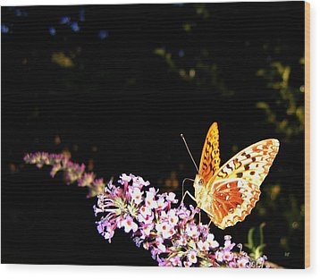 Butterfly Banquet 1 Wood Print by Will Borden