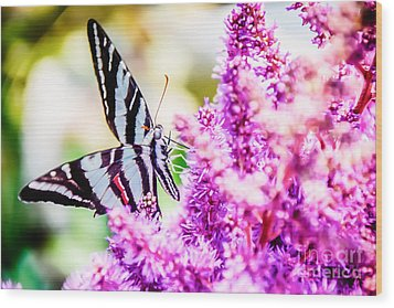 Butterfly Beautiful  Wood Print