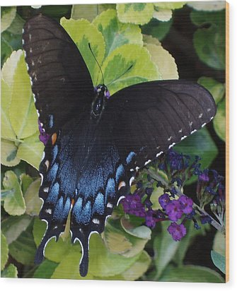 Butterfly Beauty Brown And Blue 2 Wood Print by Kicking Bear  Productions