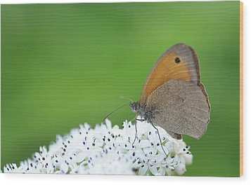 Wood Print featuring the photograph Butterfly by Bess Hamiti