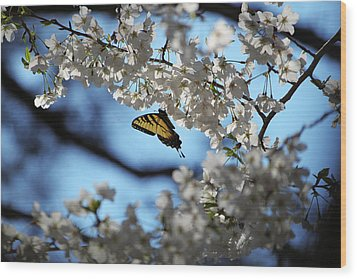 Butterfly Blossom Wood Print by Nathan Grisham