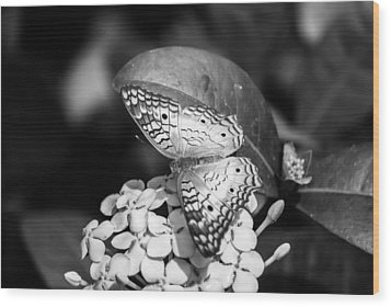 Butterfly Bw - Ins18 Wood Print