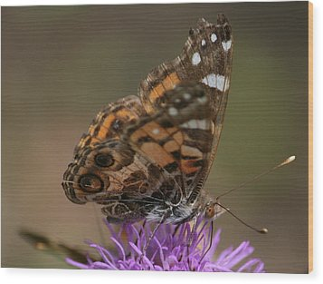 Wood Print featuring the photograph Butterfly by Cathy Harper