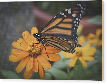 Butterfly Wood Print by Christina Durity