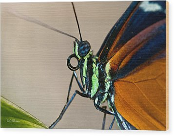 Butterfly Closeup Wood Print by Christopher Holmes