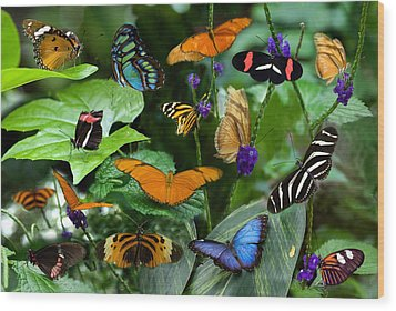 Butterfly Collage Wood Print by Cabral Stock