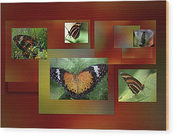 Wood Print featuring the photograph Butterfly Colllage by Irma BACKELANT GALLERIES