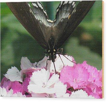 Butterfly Cup Wood Print by Debra     Vatalaro