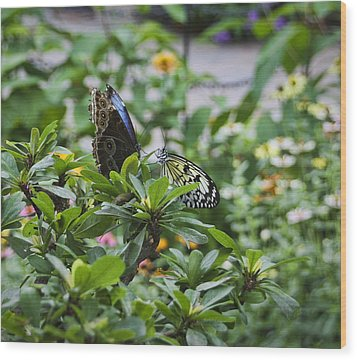 Butterfly Dance Wood Print by Christina Durity