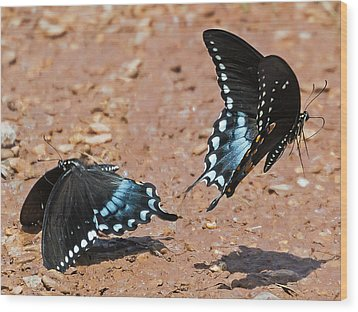 Wood Print featuring the photograph Butterfly Dance by Ron Dubin