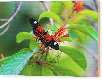 Wood Print featuring the photograph Butterfly  by David Morefield