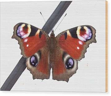 Butterfly Wood Print by Deborah Brewer
