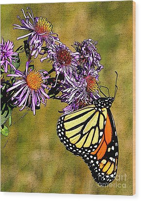 Butterfly Delight Wood Print by Diane E Berry