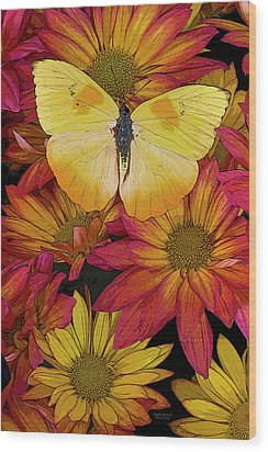 Butterfly Detail Wood Print by JQ Licensing