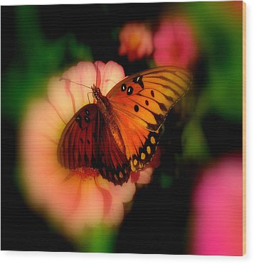 Butterfly Dreams Wood Print by Dottie Dees
