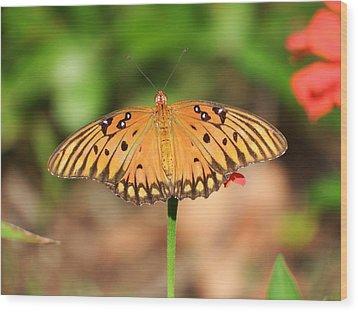 Butterfly Flower Wood Print by Cathy Harper