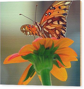 Butterfly Flower Wood Print by Dottie Dees