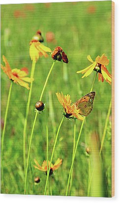 Butterfly Freedom Wood Print by Toni Hopper