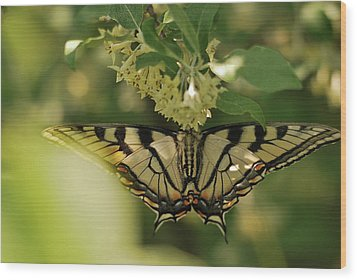 Wood Print featuring the photograph Butterfly From Another Side by Susan Capuano
