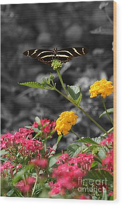 Wood Print featuring the photograph Butterfly Garden 05 - Zebra Heliconian by E B Schmidt