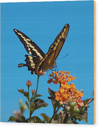 Butterfly II Wood Print by Susan Heller