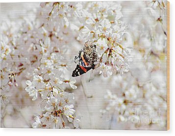 Wood Print featuring the photograph Butterfly In Cherry Blossom by Charline Xia