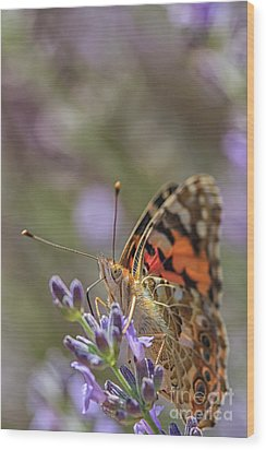 Wood Print featuring the photograph Butterfly In Close Up by Patricia Hofmeester