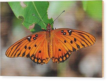 Butterfly In Feast Wood Print