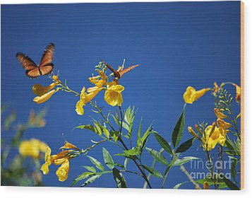 Wood Print featuring the photograph Butterfly In The Sonoran Desert Musuem by Donna Greene