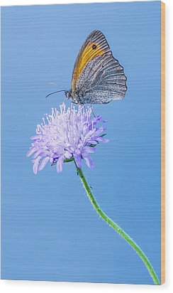 Wood Print featuring the photograph Butterfly by Jaroslaw Grudzinski