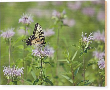 Butterfly Wood Print by June Marie Sobrito
