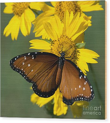 Butterfly Kisses Wood Print by Charles Dobbs